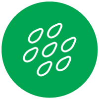 AgriculTech Seed Icon